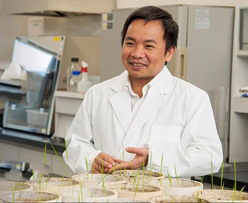 Phương pháp 'đột biến hô hấp' có thể tạo giống lúa đạt 30 tấn/ha